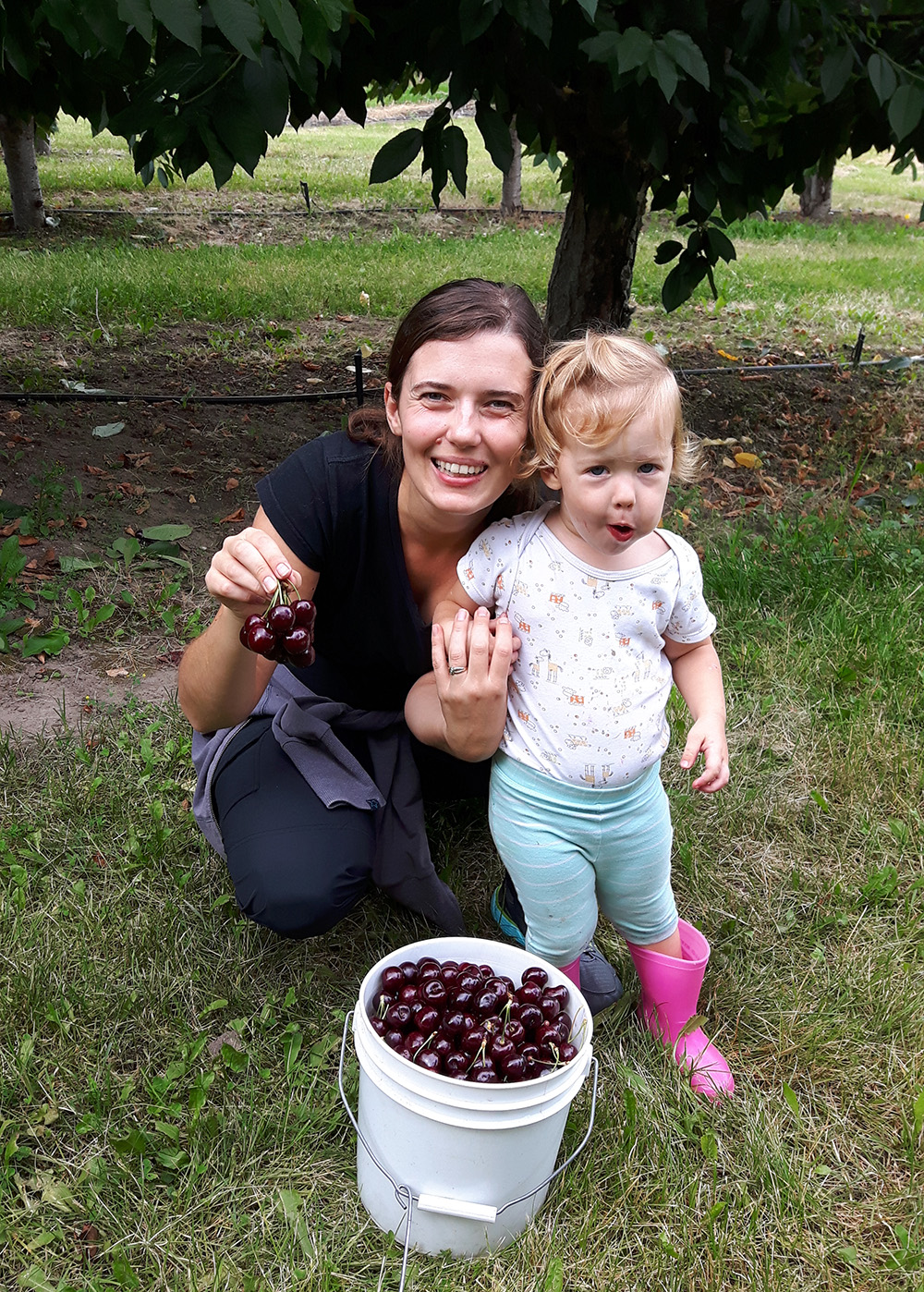 Picking Cherries in Kelowna BC